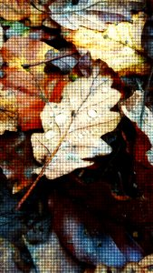 Blätter mit Regen drauf
